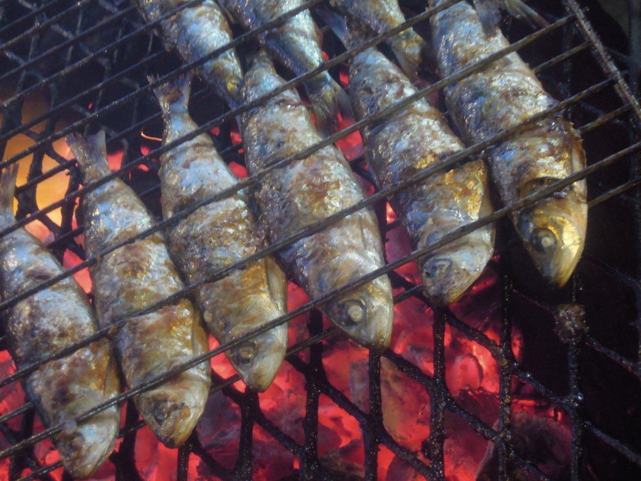 sardinhas na noite de santo antónio Sardinhas na noite de Santo António são as melhores DSCN051011